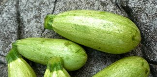 Marrow Vegetable