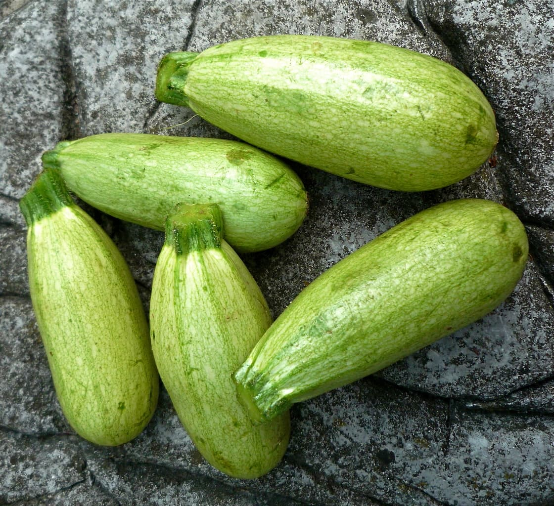 the health benefits of marrow vegetables — healthy builderz